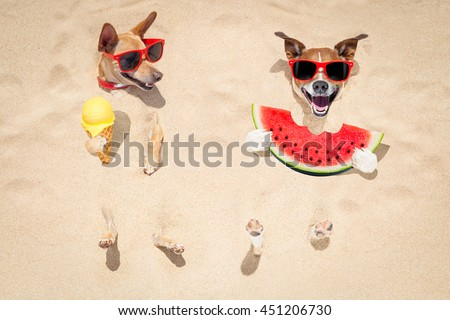 funny couple of dogs   buried in the sand at the beach on summer vacation holidays ,  wearing red sunglasses, eating a fresh juicy watermelon and ice cream on cone waffle - stock photo