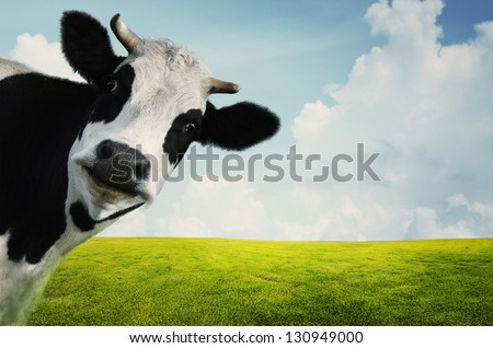 Funny cow on a green summer meadow - stock photo