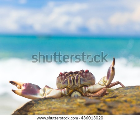 Funny Crab By the Sea  - stock photo