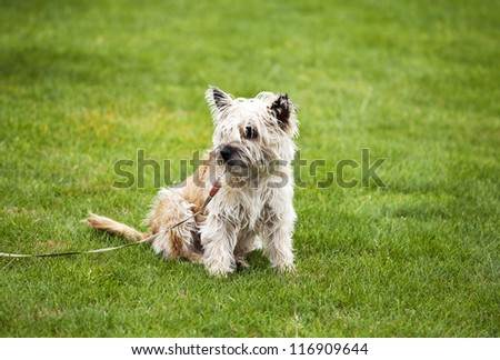 funny cute beige dog on grass outdoors