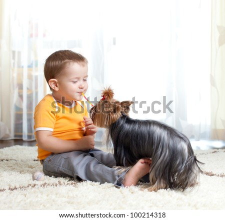 funny cute child playing with pet dog Yorkshire terrier