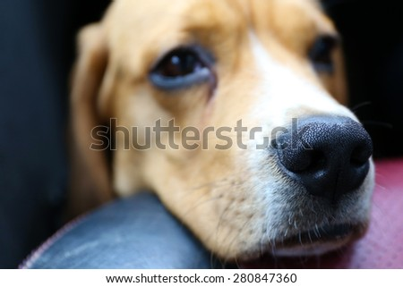 Funny cute dog close up - stock photo