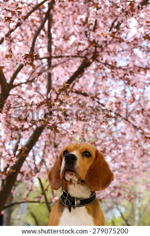 Funny cute dog near blossoming tree outdoors - stock photo