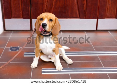 Funny cute dog near door at home - stock photo
