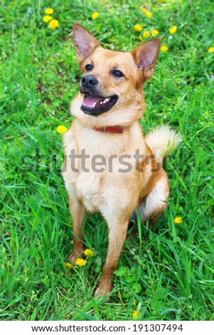 Funny cute dog, outdoors