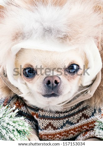 funny cute dog wearing warm hat and coat on a winter day - stock photo