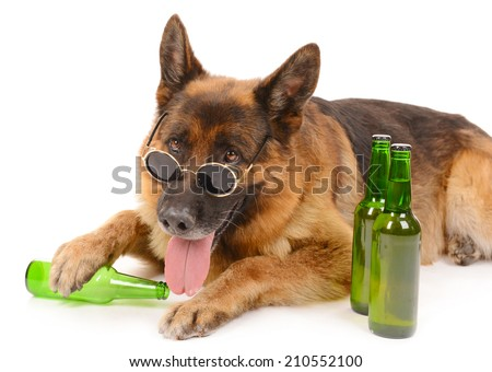 Funny cute dog with bottles of beer isolated on white - stock photo