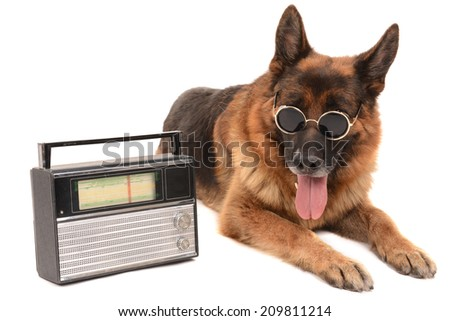 Funny cute dog with radio isolated on white - stock photo