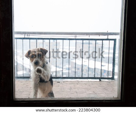 Funny dog foxterier behind the glass window - stock photo
