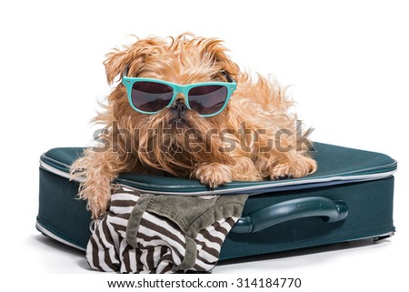 Funny dog in glasses lies on the suitcase, isolated on white - stock photo