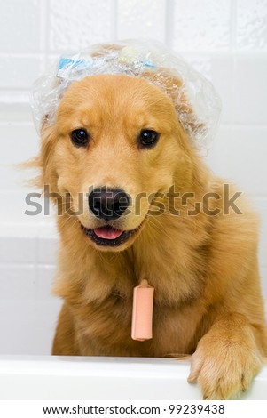 funny dog in the bath tub wearing a shower cap - stock photo