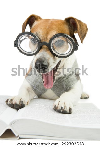 Funny dog Jack Russel terrier wearing glasses and a sweater student studying reading book and summary of lectures  - stock photo