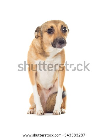 Funny dog looking isolated on white background