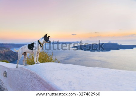 Funny dog on a white stone wall watching the sunset in the caldera of Santorini (Thira) island.Romantic panoramic view from Fira town.Seascape.Cyclades.Greece.Europe. - stock photo