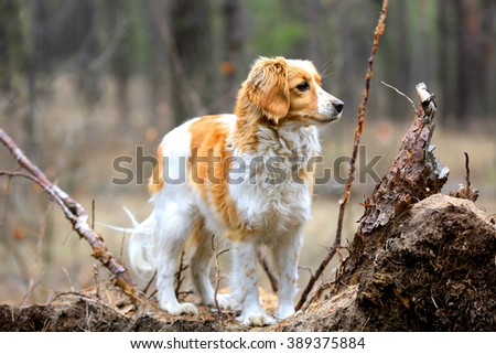 Funny dog portrait in forest - stock photo