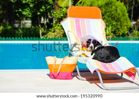 Funny dog resting on a deck chair and wearing sunglasses on summer vacation at swimming pool. - stock photo