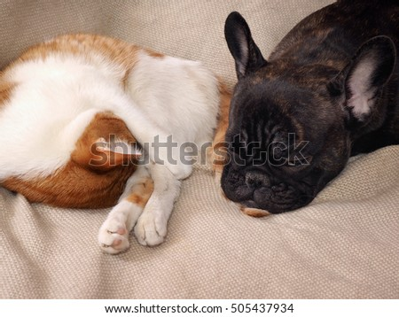 Funny dog sleeps on a cat tail. Friendship cats and dogs