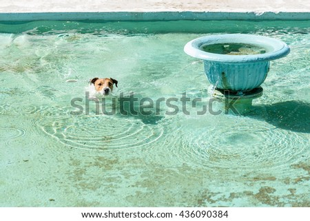 Funny dog swimming in turquoise water pool of fountain - stock photo