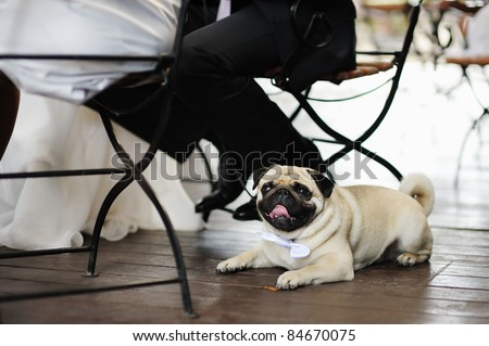Funny dog with a bow at wedding