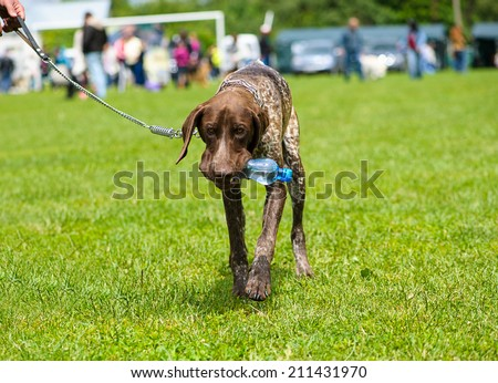 Funny dog with bottle of water