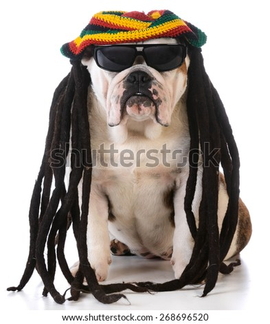funny dog with dreadlock wig on white background - stock photo