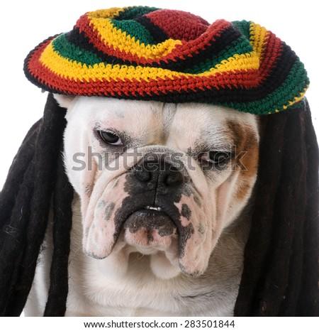funny dog with dreadlocks - bulldog - stock photo