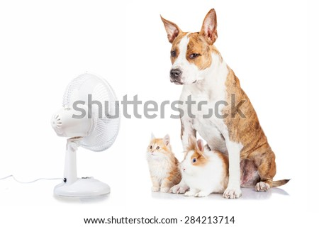 Funny dog with flying ears up, kitten and rabbit sitting opposite the electric fan - stock photo