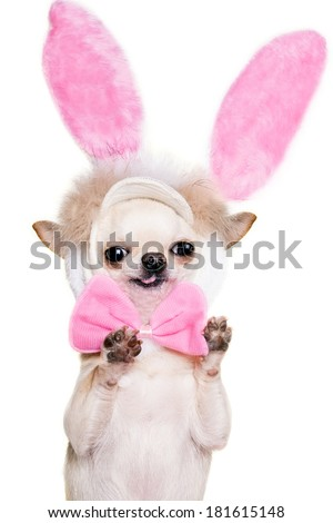funny dog with pink hare eras and bow tie standing with paws up isolated