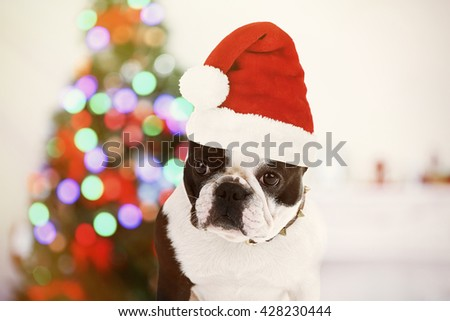 Funny dog with Santa hat near Christmas tree - stock photo