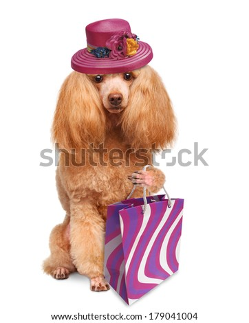 funny dog with shopping bags - stock photo