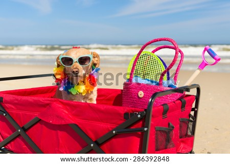 Funny dog with sunglasses on vacation at the beach - stock photo