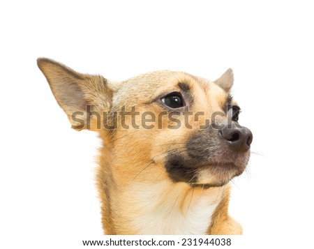 funny doggy on a white background isolated - stock photo