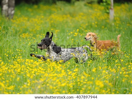 funny dogs playing on the green grass