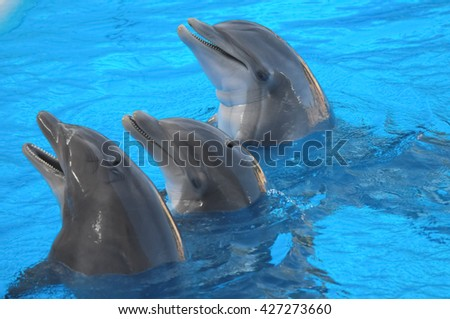 Funny Dolphins Swimming on a very Blue Water - stock photo