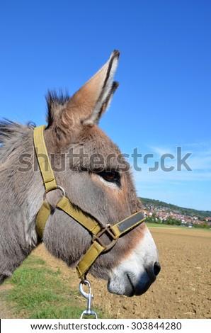 Sunglasses Logo Black And White Donkey Head Stock Imag...