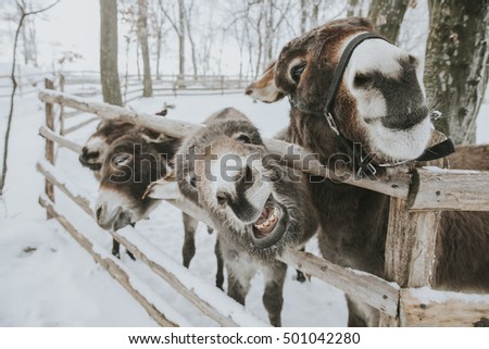 funny donkey in winter