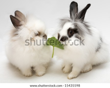 Funny dwarfish rabbits - stock photo