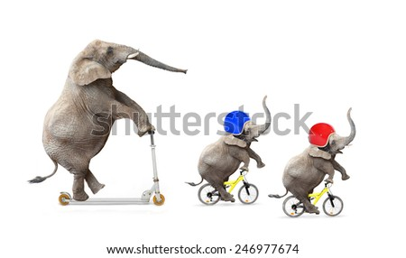 Funny elephant's family bicycling. Road safety concept. - stock photo