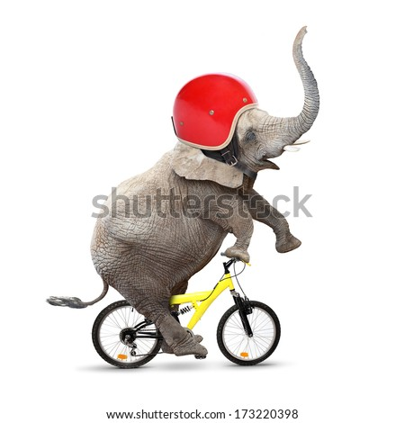 Funny elephant with protective helmet riding a bike. Safety and insurance concept. - stock photo