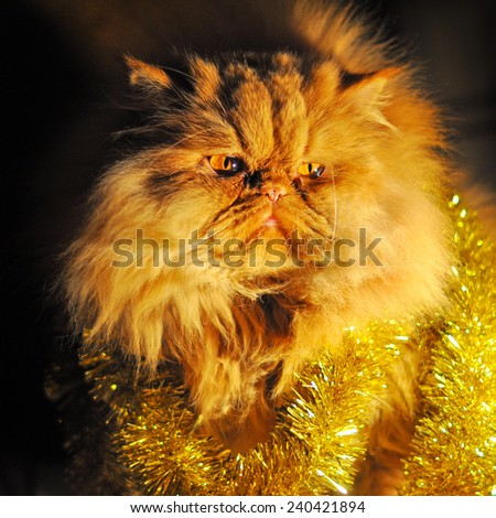 funny fat cat in Christmas garland - stock photo