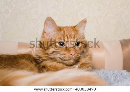 funny fluffy ginger cat lying on a bed - stock photo