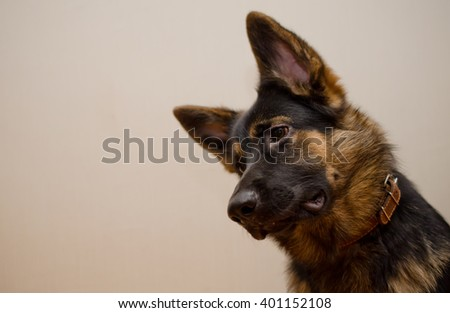 Funny German shepherd with its head tilted (shallow DOF, selective focus on the eye), retro style, with copy space on the left for your text - stock photo