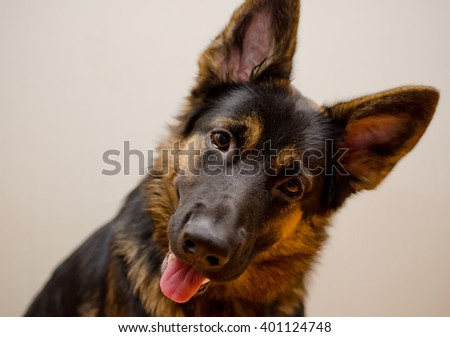 Funny German shepherd with its head tilted (shallow DOF, selective focus on the eyes), retro style - stock photo