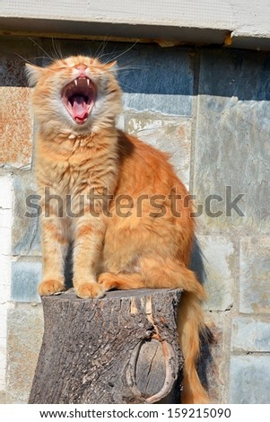 Funny ginger cat - stock photo