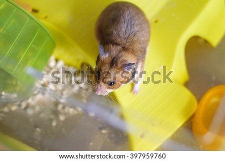 Funny ginger hamster in the his cage - stock photo