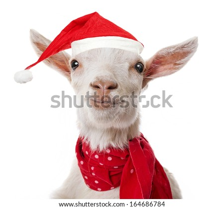 funny goat with a red santa cap - stock photo