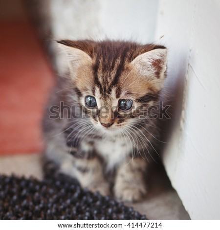 funny gray-brown kitten with big blue eyes