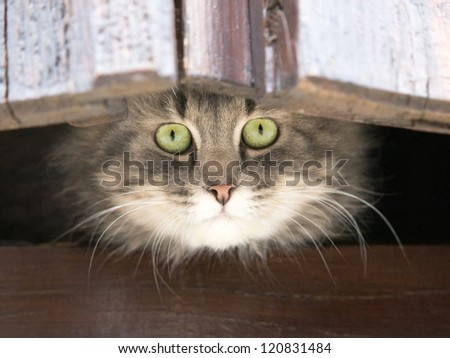 funny gray cat on the window - stock photo