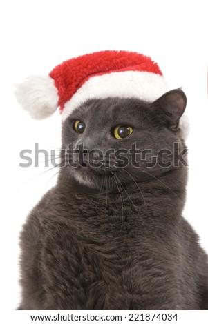 Funny Gray Cat Santa - Cute christmas cat, Christmas pet in the Santa hat - stock photo