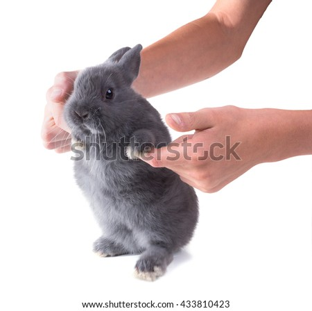 Funny grey dwarf  fluffy rabbit   in children's hands. Isolated on white background